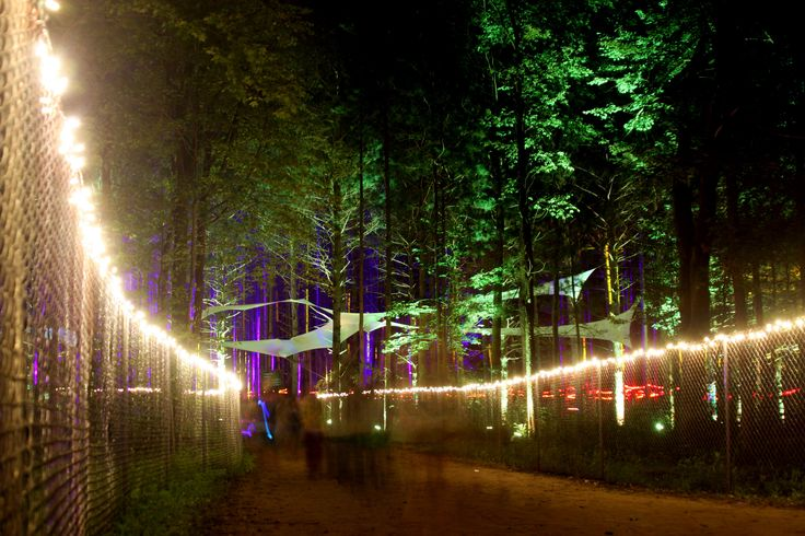 Electric Forest someday!