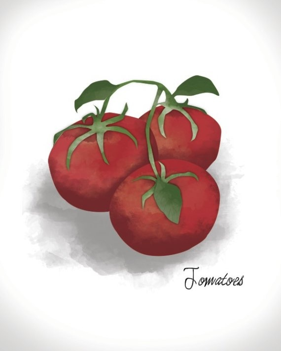 Tomatoes - Culinary Art Print - 8x10
