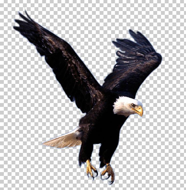 Eagle Png Eagle Png Bald Eagle
