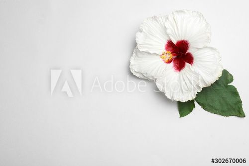 Beautiful Tropical Hibiscus Flower With Leaves On White Background Top View Space For Text Sponsored Flower Leaves In 2020 Hibiscus Flowers Flowers Hibiscus