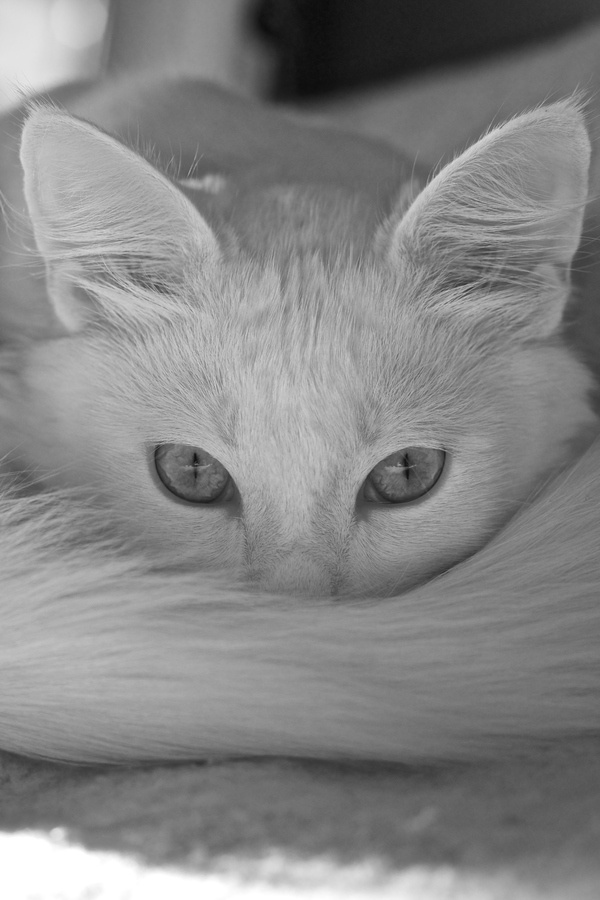 """""""I gave an order to my cat and he gave it to his tail."""" --Chinese Proverb"""
