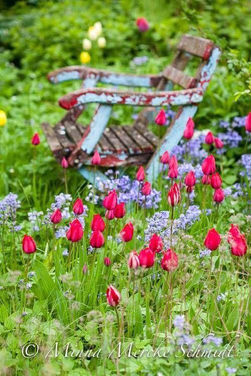 Spring bulbs in garden, bench