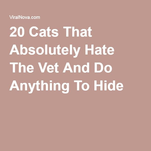 20 Cats That Absolutely Hate The Vet And Do Anything To Hide