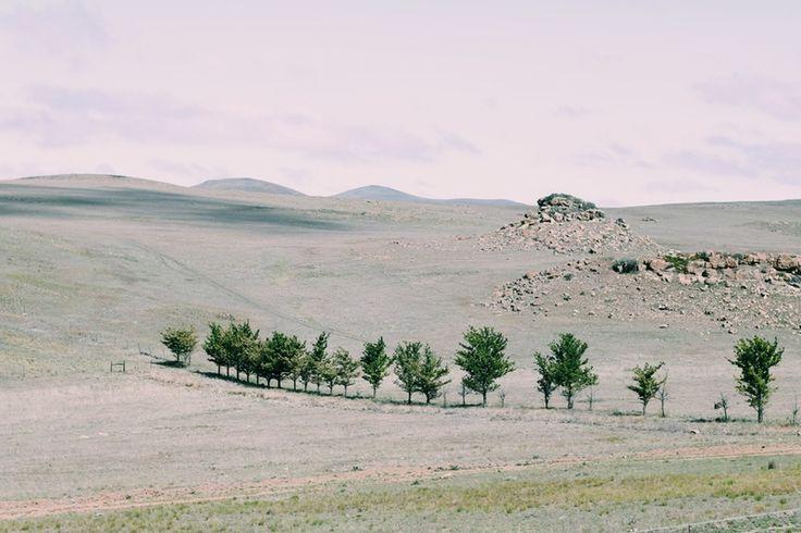 Growth in a barren place | leeroyesbend | VSCO Grid®