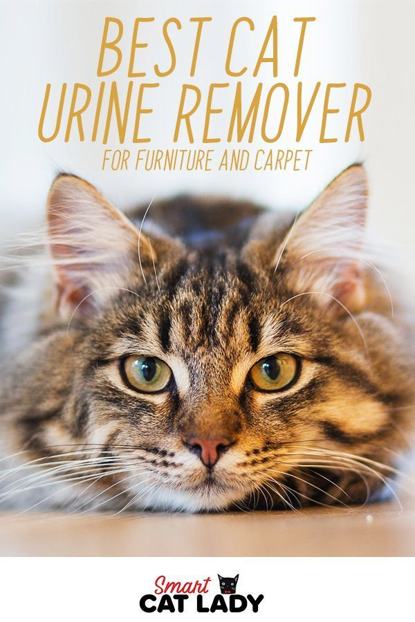 Does Your Cat Pee In The House Cat Urine In The Carpet And Furniture Can Be A Serious Problem Check Out The B Cat Urine Remover Cat Urine Cat Peeing In