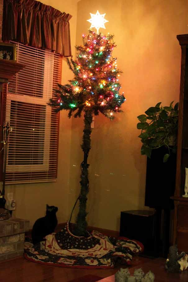 16 Genius Ways To Protect Your Christmas Trees From Cats We Love Cats And Kittens Cat Proof Christmas Tree Christmas Cats Christmas Animals