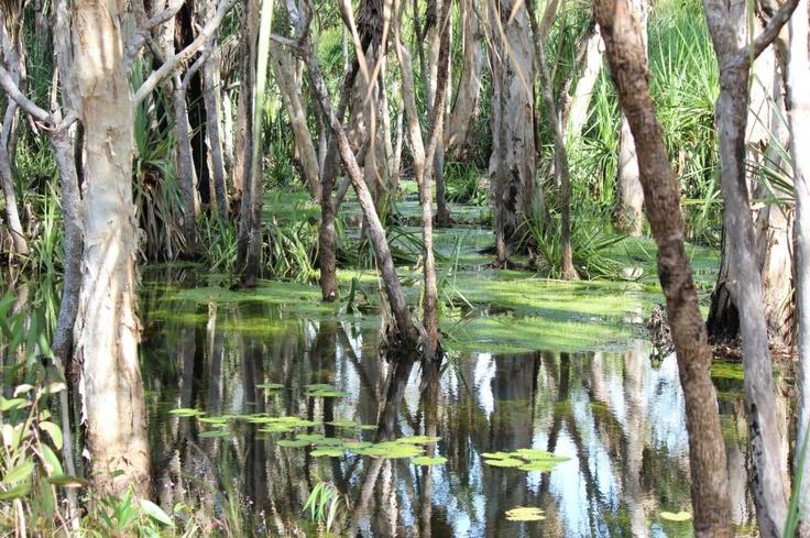 Paperbark Creek - Northern Territory - Australia