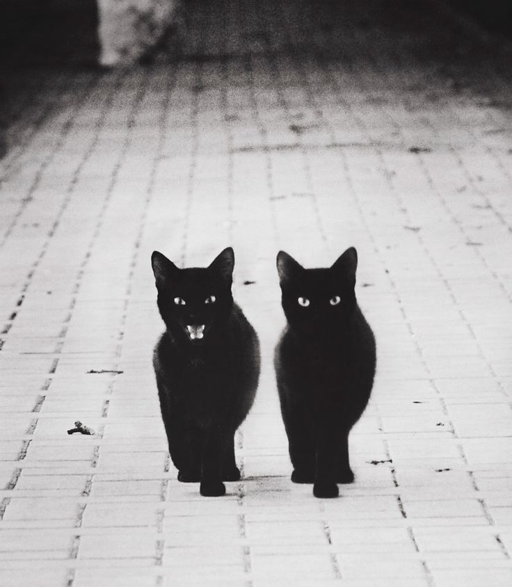 The Mysterious Lives Of Cats Captured In Black & White