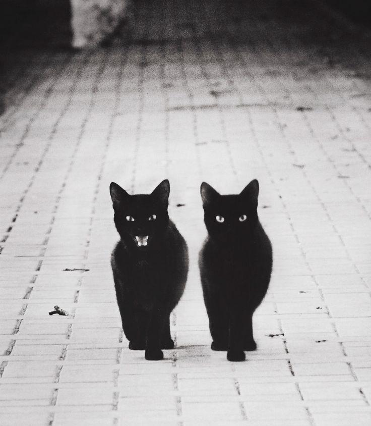 vies-chats-noir-et-blanc-01                                                                                                                                                                                 Plus