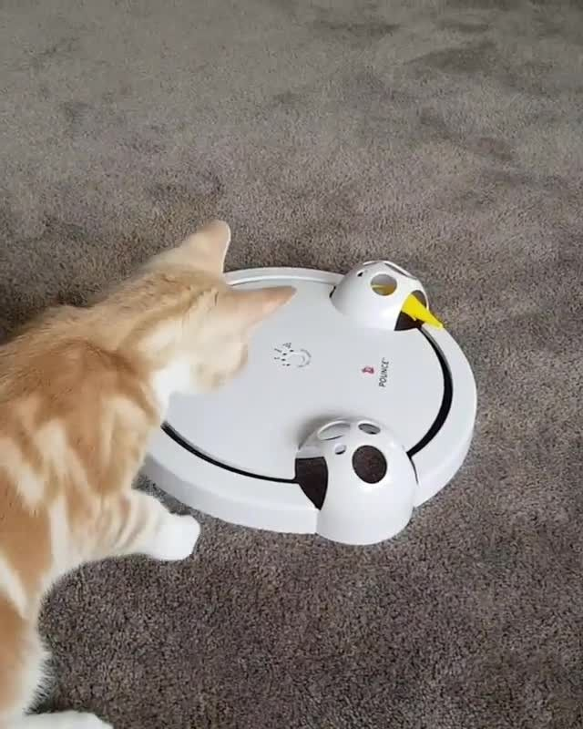 Bubbleton Is Having A Blast With His Favourite Frolicat Toy Engaging Their Natural Instincts To Chase Pounce And Captur Pets Natural Instinct Having A Blast