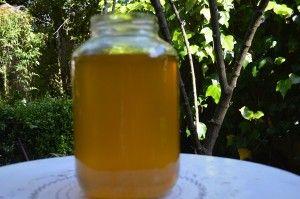 fermentovaný čaj z kurkumy a zázvoru