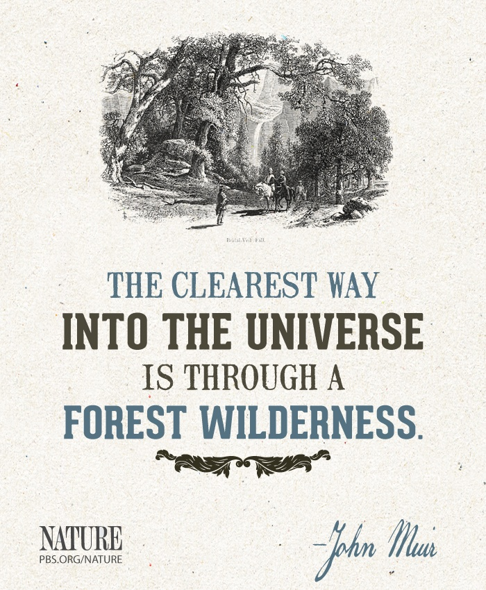 Images Of Nature With Quotes For Facebook: 1000+ Images About NATURE Quotes On Pinterest
