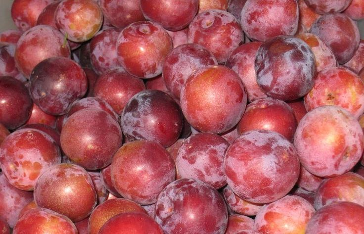 We have a plum tree that has given us more plums than I have ever seen. Ever. I have actually never eaten a plum until this year, off of our...