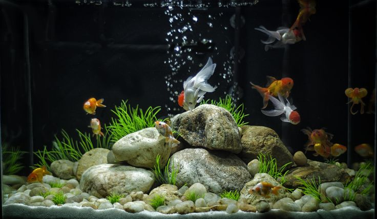 Images For > Cool Goldfish Tank Ideas