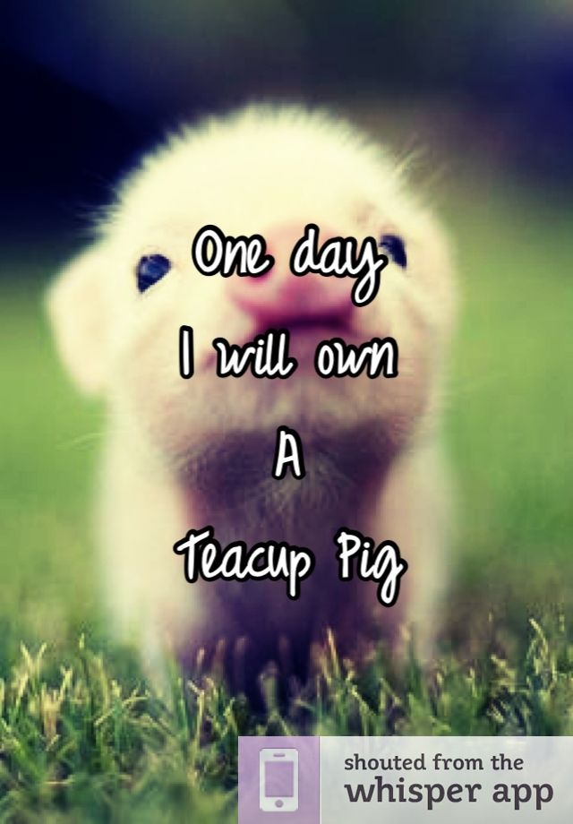 I will god damn it! If Paul gets a hairless cat with a sweater I want a teacup pig!