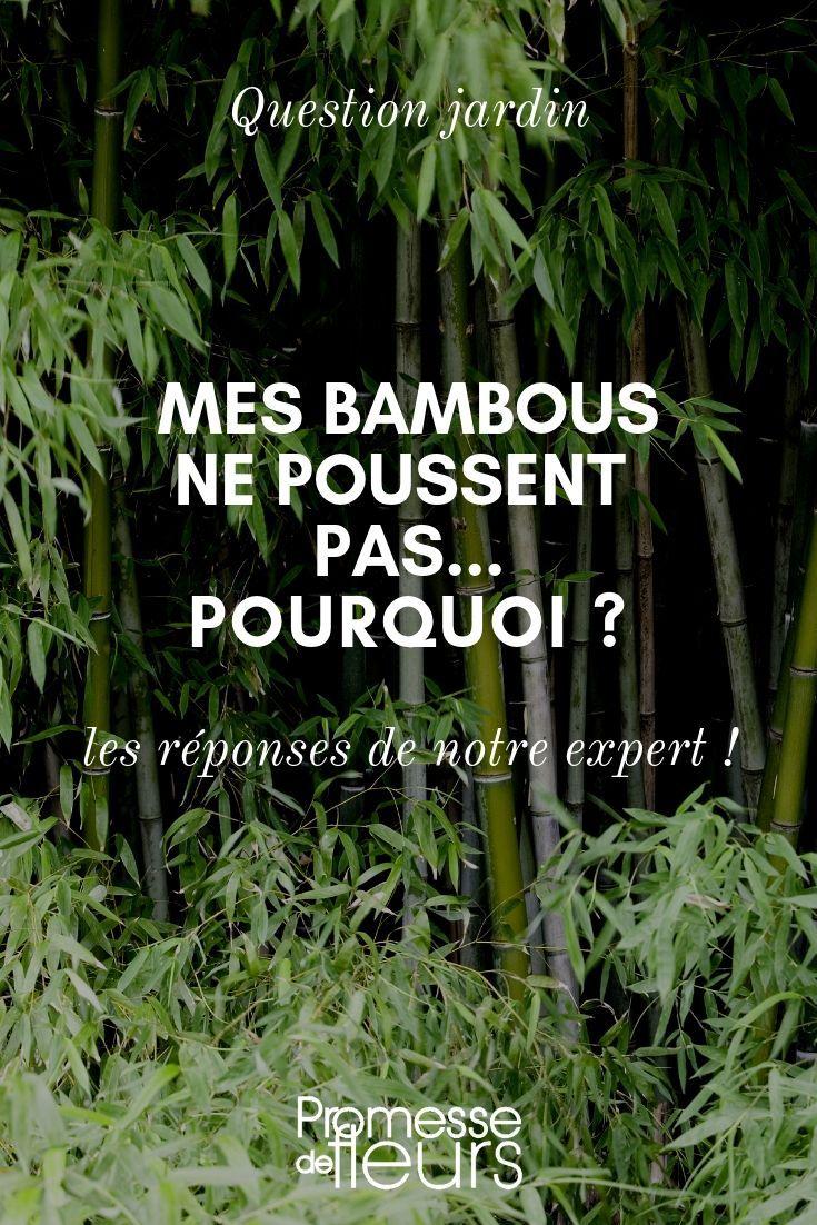 Comment Se Débarrasser Des Bambous Dans Le Jardin mes bambous ne poussent pas, pourquoi ? | bambous jardin