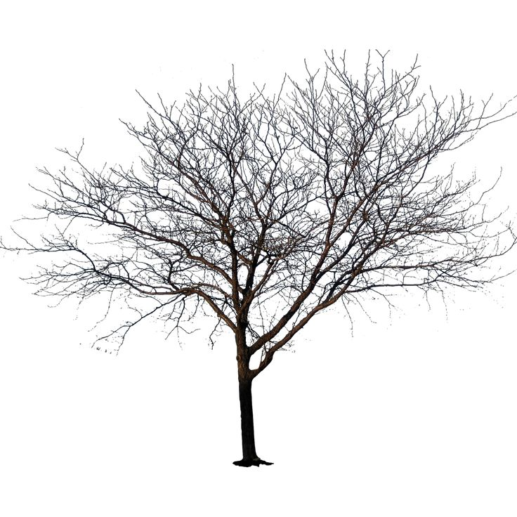 Deciduous Tree in Early Spring | Immediate Entourage