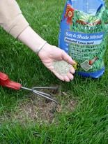 Do winter temps kill grass seed planted in the fall?