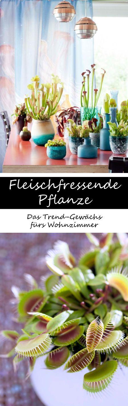 25+ ide Ungeziefer terbaik hanya di Pinterest Schädlinge, Mittel - hausmittel gegen ameisen in der küche