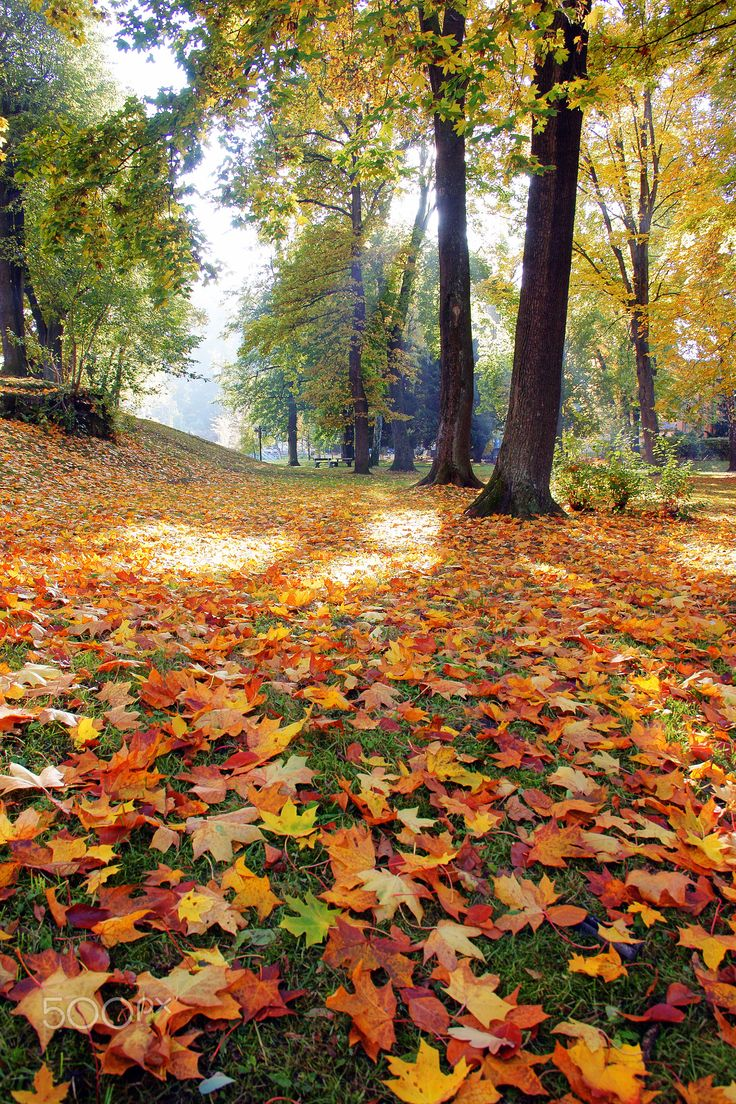 Autumn leaves. by Dagmar Germaničová on 500px