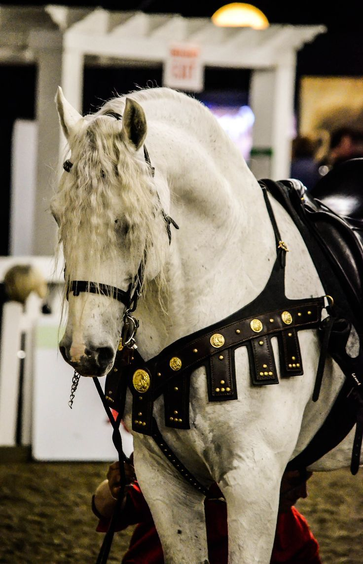 Imperatore horse vans for sale - Rawf 2013 Fine Point Photography