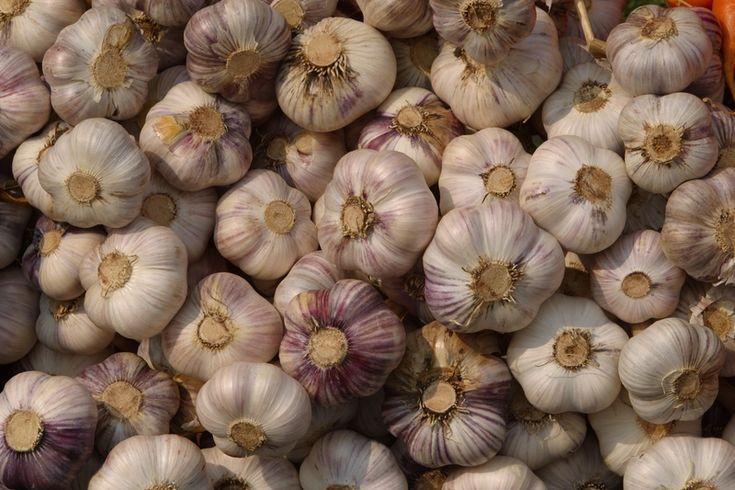 Learn how to plant, grow, and harvest garlic with this growing guide from The Old Farmer's Almanac.