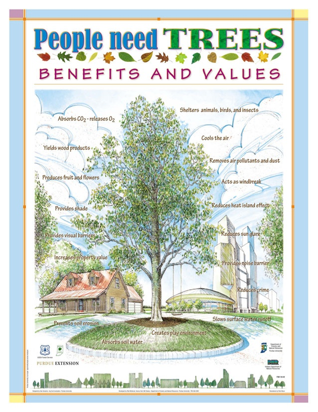 The Social & Health Benefits of Trees