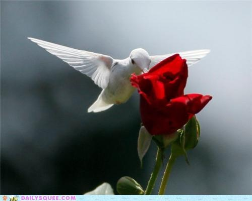 white hummingbird: White Hummingbirds, Red Flower, Birds Of Paradis, Hum Birds, Red Roses, Animal, White Buffalo, Ruby Throat Hummingbirds, Albino Hummingbirds