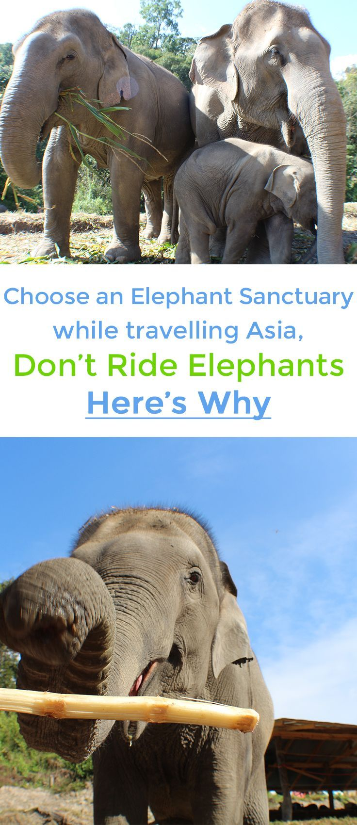 Visit the happy elephants at the Elephant Sanctuaries on your trip to Thailand or Asia! Find out why it's NOT OK to ride Elephants and how you can be a part of helping rescue them in Thailand.