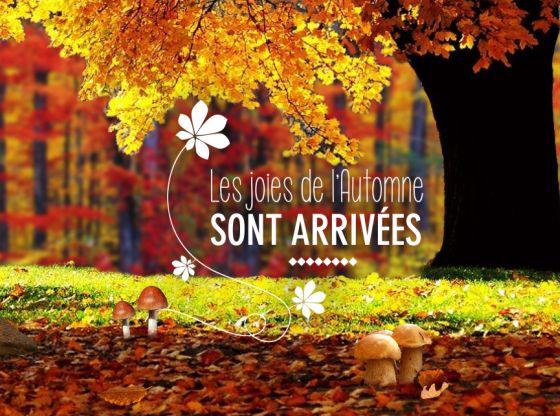 Les joies de l'automne sont arrivées ! Envoyez cette carte virtuelle gratuite : http://www.dromadaire.com/carte-automne