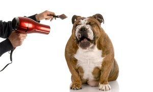 Groupon - Formation pour devenir assistant vétérinaire avec Holly and Hugo à 29 € (83 % de réduction). Prix Groupon : 29€