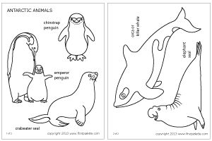 Polar Animals | Printable Templates & Coloring Pages | FirstPalette.