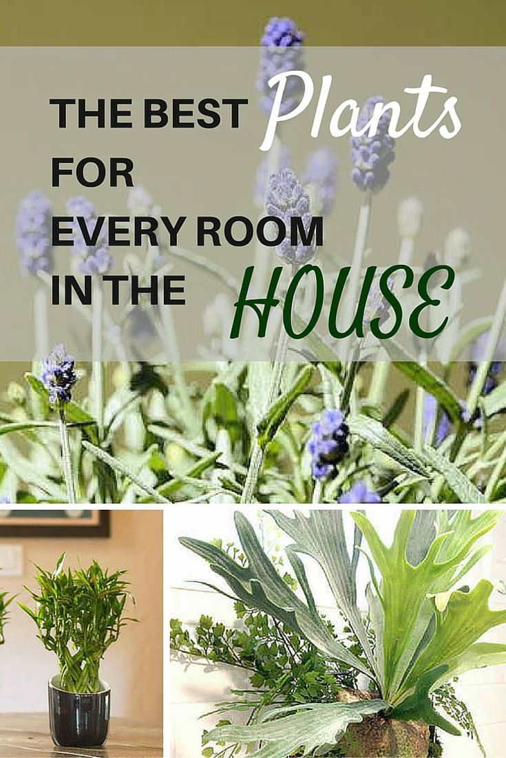 Plants For Indoor Home Part - 43: Believe It Or Not, Some House Plants Are Better Suited To Certain Parts Of  The