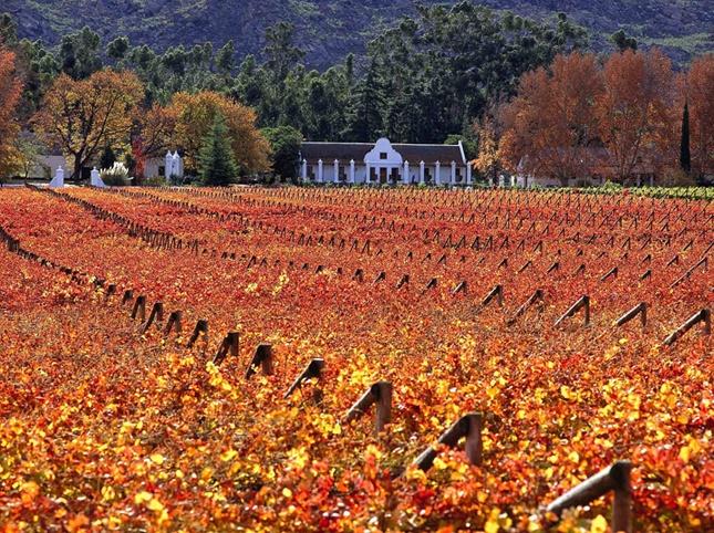 Herbst in den südafrikanischen Winelands. #suedafrika, #wein, #winelands, #suedafrika, #kapstadt, #genuss