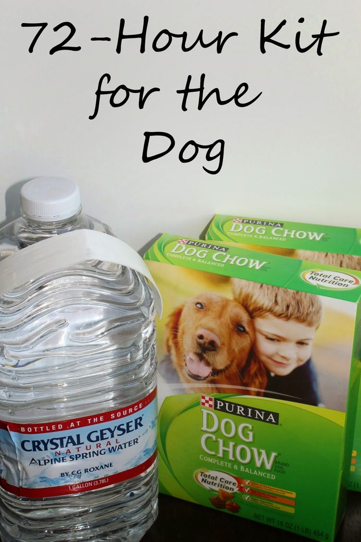 7 best pets images on pinterest dog care dog recipes and puppy care