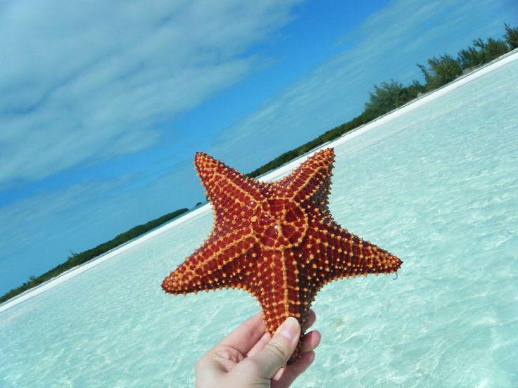Starfish, Cayo Largo del Sur, Cuba