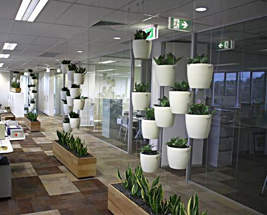 Plants that appear to be hanging in mid air! See more of our vertical gardens at www.greendesign.com.au