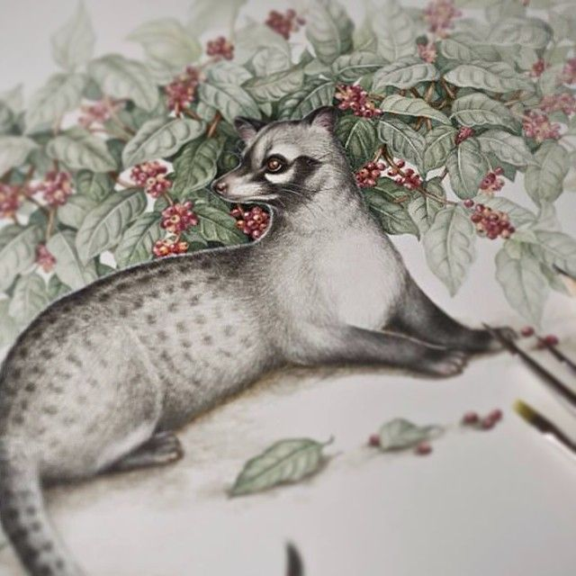 The luwak illustration I made for #excelso #coffee #packaging. Watercolours on paper  #luwak #animal #drybrush #naturalillustration #illustration #painting #winsorandnewton #fabriano #watercolor #watercolour #eunikenugroho
