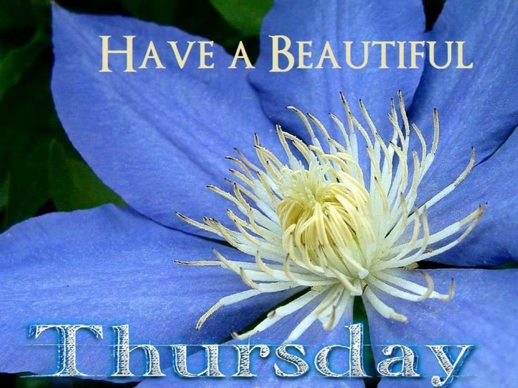 Have a beautiful Thursday quotes quote days of the week thursday quotes happy thursday thankful thursday thurday