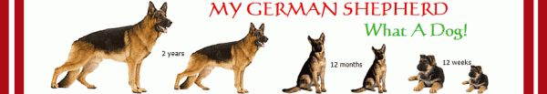 German Shepherd Breeders in Canada