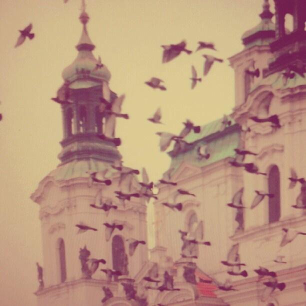 "@tabina_srckova's photo: ""V Praze sněží holubi.  #prague #czech #losholubos #flyaway #bye #instamania #trip #instaaaaah"""