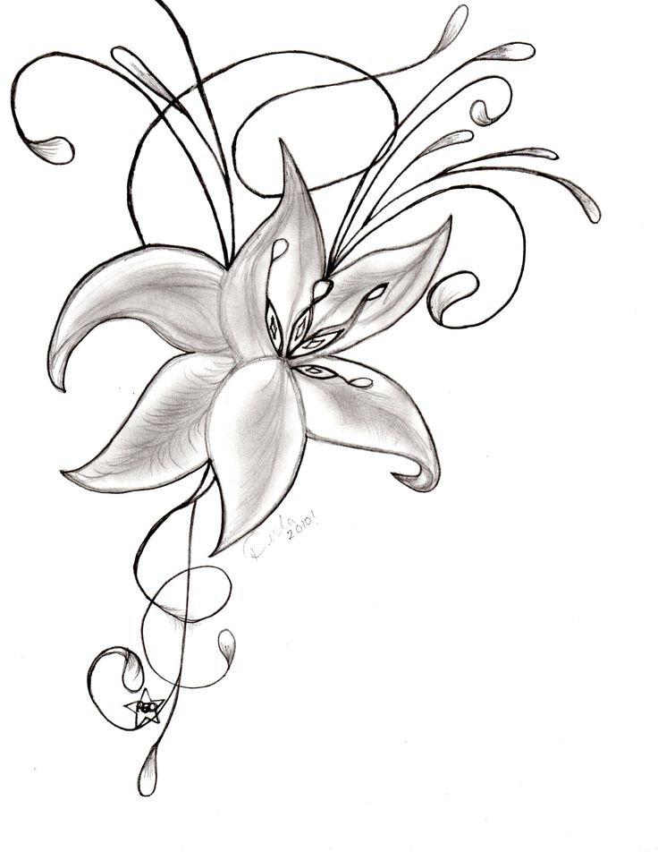 Orchid Flower Line Drawing : Doodle drawings am flower orchid sketch