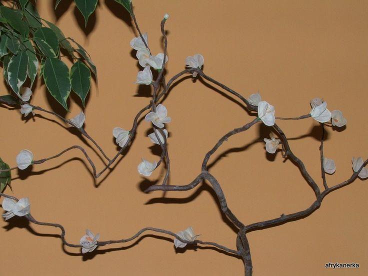 Zdjęcie: Gałązka kwitnącej wiśni z bibuły