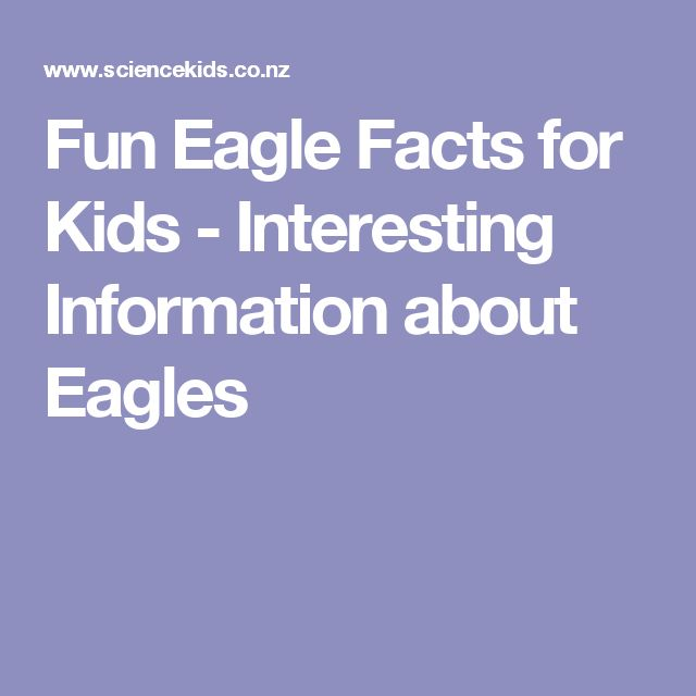 Fun Eagle Facts for Kids - Interesting Information about Eagles