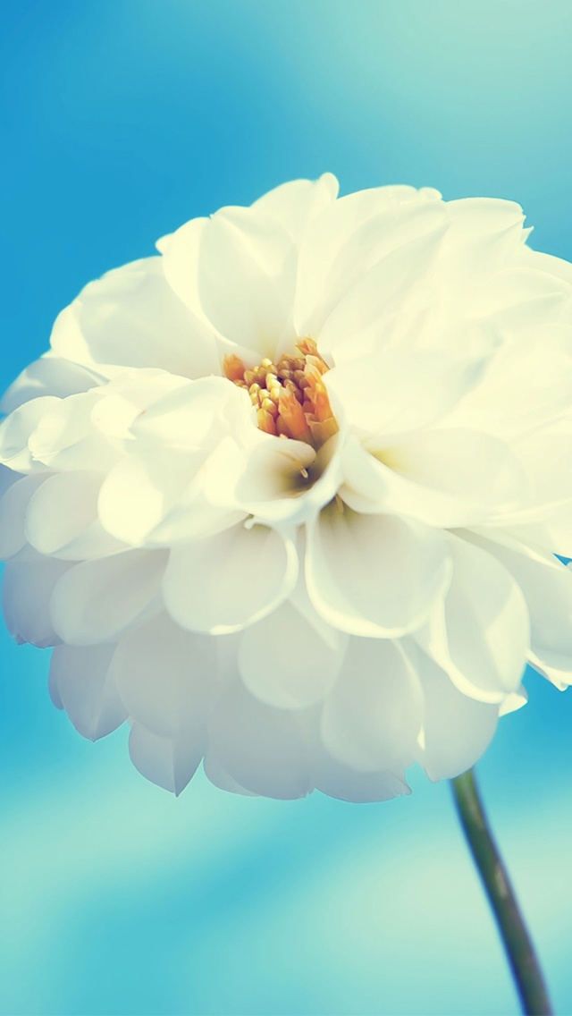 White flower | #wallpapers #iphone