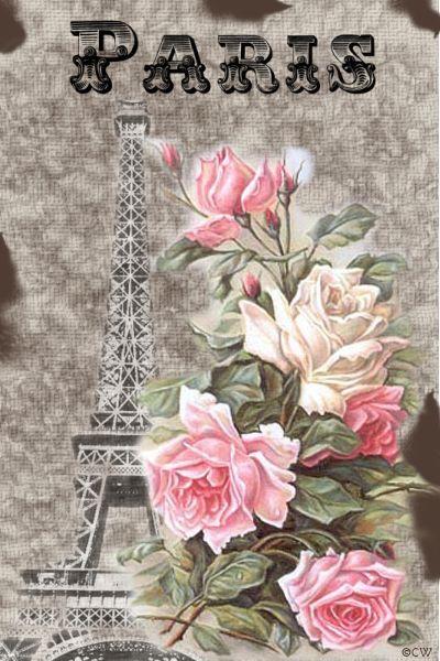 Rose de Paris....