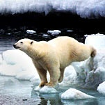 How Brown and Polar Bears Split and Coupled