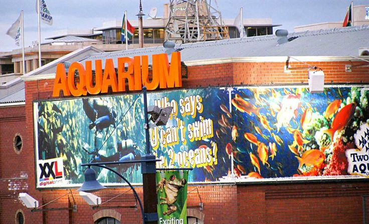 #2 #1000thingstodo #capetown Discover the motion of the Two Oceans Aquarium   I <3 Cape Town