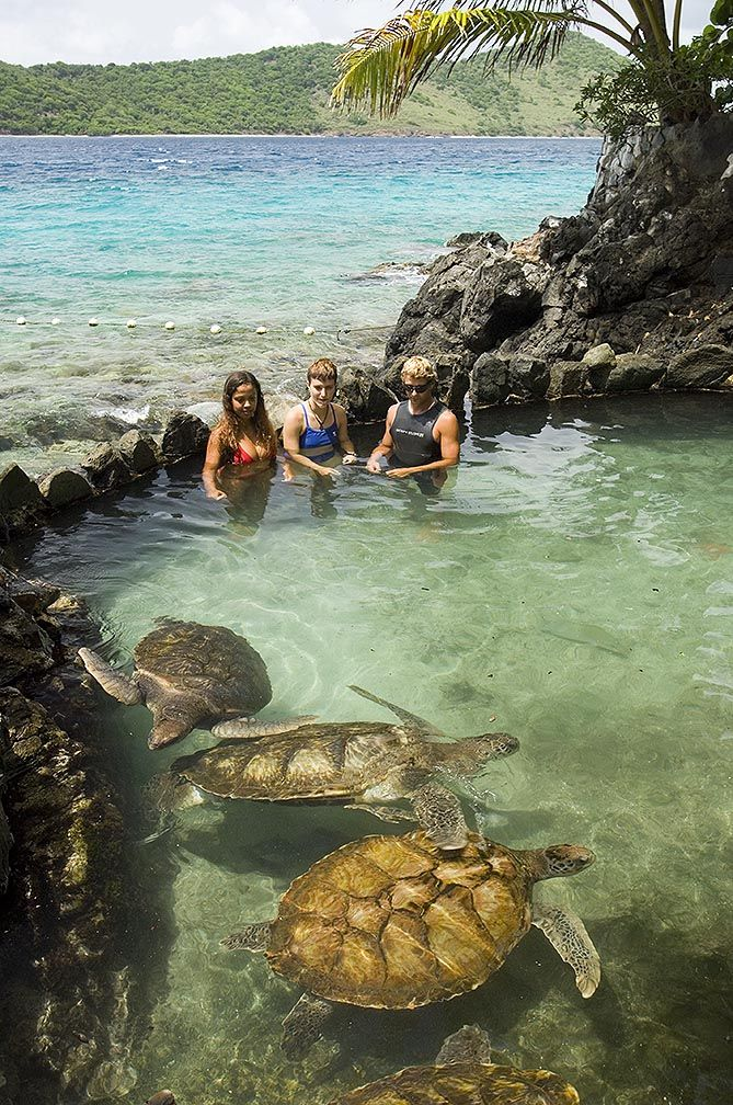 Turtle Pool » Coral World. St. Thomas, USVI