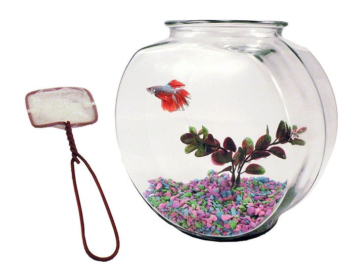 how to clean the betta fish bowl